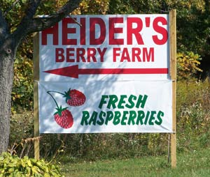 Fresh Pick your own berry farm in IL