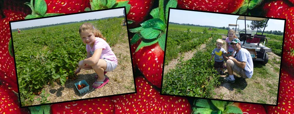 Heiders Berry Farm customer buying a carton of strawberry